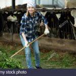 Práca na farme / Dánsko.