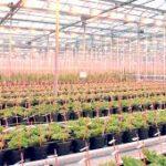 Pracovník s plodinami / Sygenta. Ref 1-NL